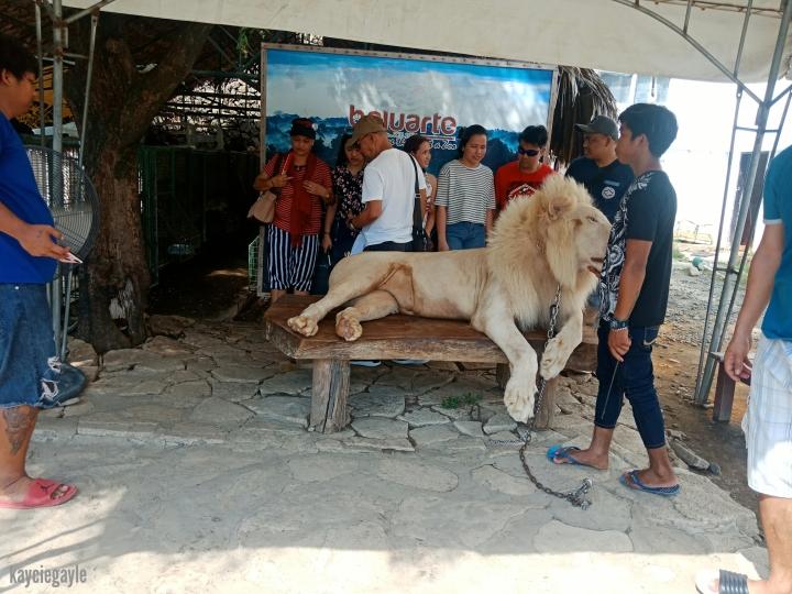 Baluarte Vigan Philippines Albino Lion