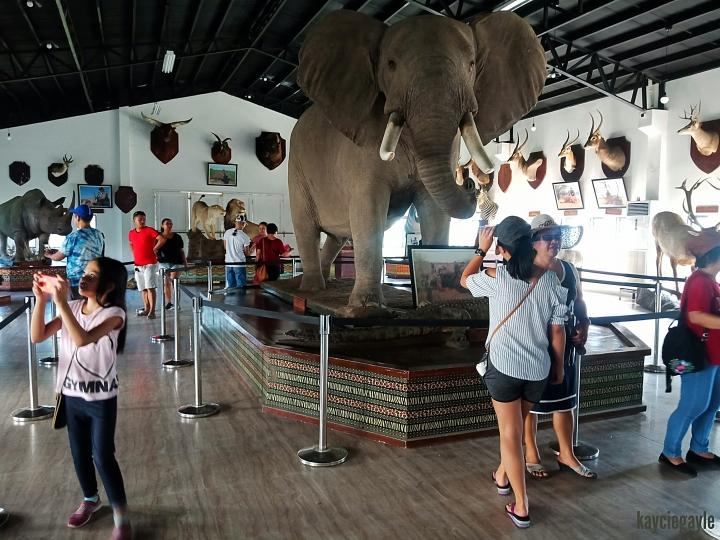 Baluarte Vigan Philippines Elephant