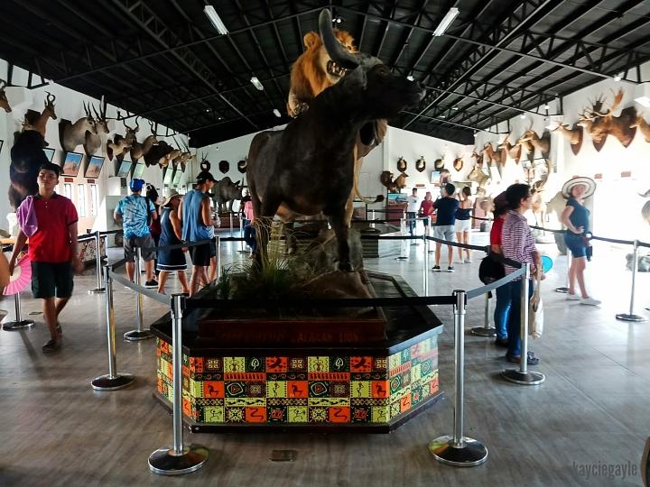 Baluarte Vigan Philippines Buffalo