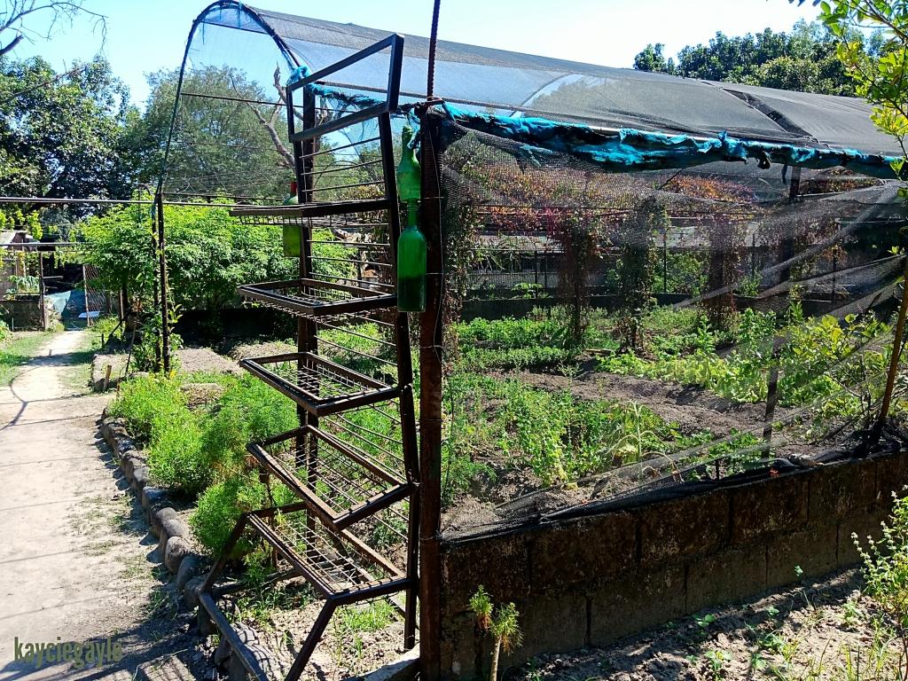 Hacienda Tour at Prado Farm Lubao Pampanga Greenhouse